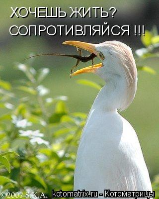 Котоматрица: ХОЧЕШЬ ЖИТЬ? СОПРОТИВЛЯЙСЯ !!!