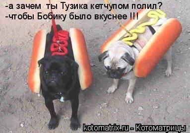 Котоматрица: -а зачем  ты Тузика кетчупом полил? -чтобы Бобику было вкуснее !!!