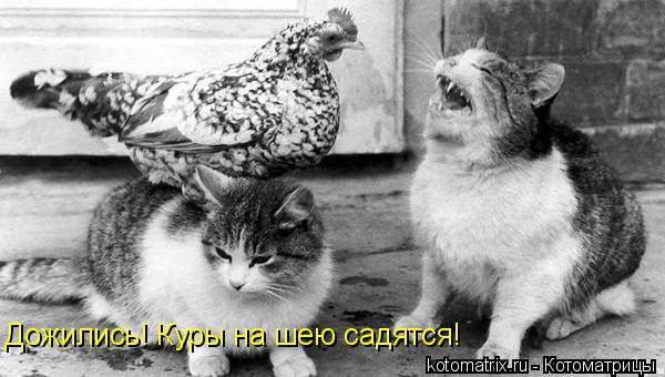 Котоматрица: Дожились! Куры на шею садятся!