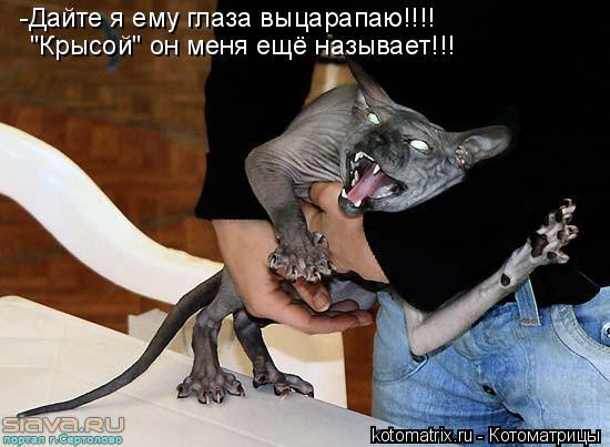 """Котоматрица: -Дайте я ему глаза выцарапаю!!!!  """"Крысой"""" он меня ещё называет!!!"""