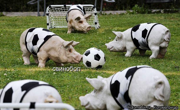 Котоматрица: свинобол