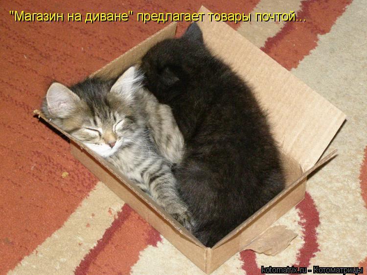 """Котоматрица: """"Магазин на диване"""" предлагает товары почтой..."""