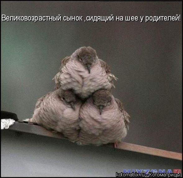 Котоматрица: Великовозрастный сынок ,сидящий на шее у родителей!