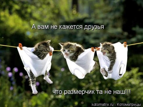 Котоматрица: А вам не кажется друзья что размерчик та не наш!!!