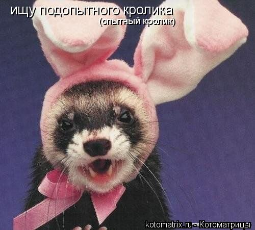 Котоматрица: ищу подопытного кролика (опытный кролик)