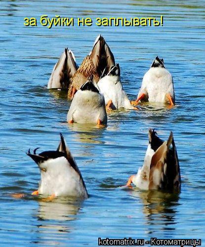 Котоматрица: за буйки не заплывать!