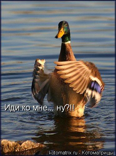 Котоматрица: Иди ко мне... ну?!!