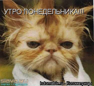 Котоматрица: УТРО ПОНЕДЕЛЬНИКА!!!