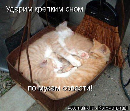 Котоматрица: Ударим крепким сном  по мукам совести!