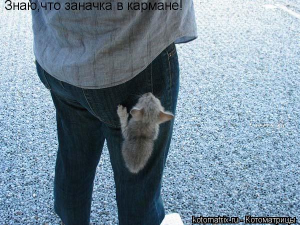 Котоматрица: Знаю,что заначка в кармане!