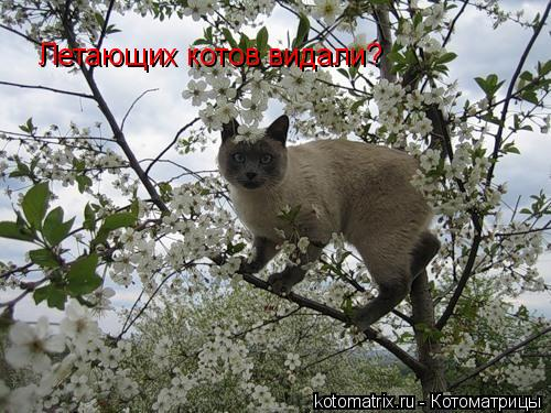 Котоматрица: Летающих котов видали?