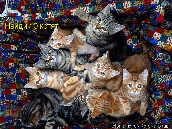 Котоматрица: Найди 10 котят