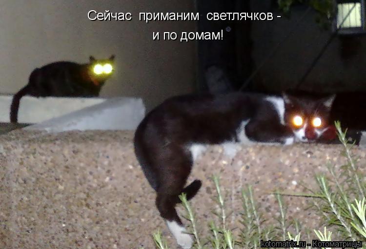 Котоматрица: Сейчас  приманим  светлячков - и по домам!