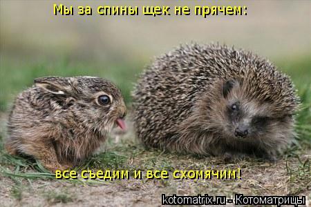 Котоматрица: Мы за спины щек не прячем: все съедим и все схомячим!