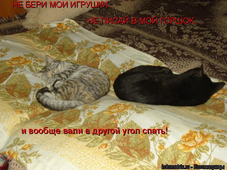Котоматрица: НЕ БЕРИ МОИ ИГРУШКИ... НЕ ПИСАЙ В МОЙ ГОРШОК... и вообще вали в другой угол спать!