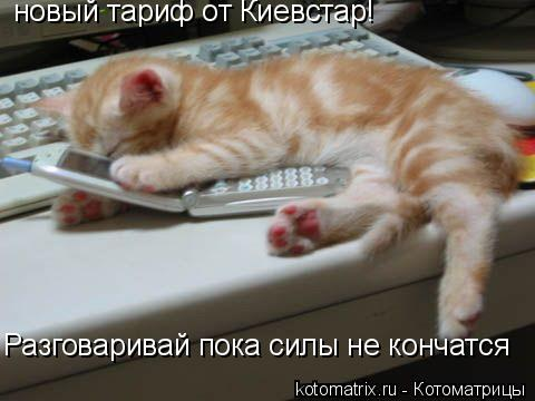 Котоматрица: новый тариф от Киевстар! Разговаривай пока силы не кончатся