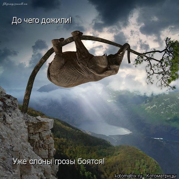 Котоматрица: До чего дожили! Уже слоны грозы боятся!