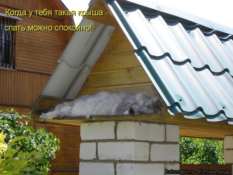 Котоматрица: Когда у тебя такая крыша - спать можно спокойно!