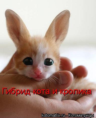 Котоматрица: Гибрид кота и кролика