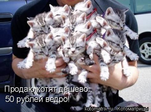 Котоматрица: Продаю котят дёшево.. 50 рублей ведро!