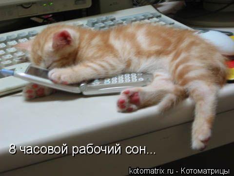 Котоматрица: 8 часовой рабочий сон...
