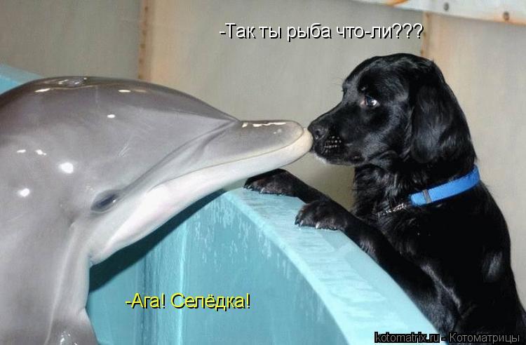 Котоматрица: -Так ты рыба что-ли???  -Ага! Селёдка!