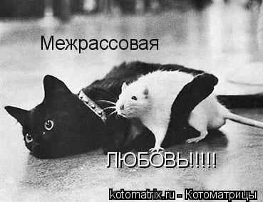 Котоматрица: Межрассовая  ЛЮБОВЬ!!!!!