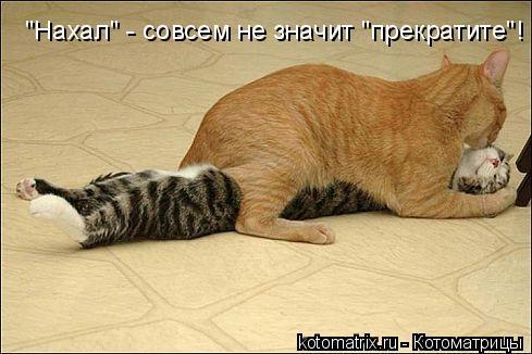 "Котоматрица: ""Нахал"" - совсем не значит ""прекратите""!"