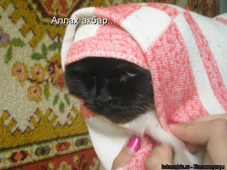 Котоматрица: Аллах акбар...