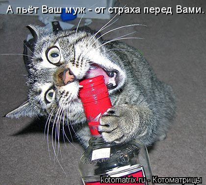 Котоматрица: А пьёт Ваш муж - от страха перед Вами.