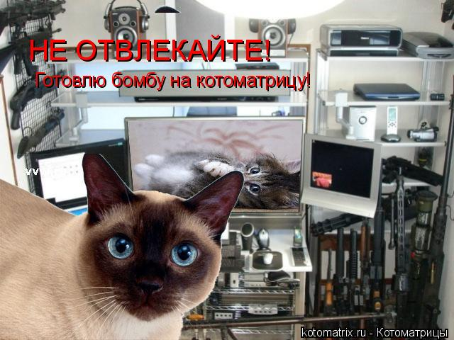 Котоматрица: НЕ ОТВЛЕКАЙТЕ! Готовлю бомбу на котоматрицу!