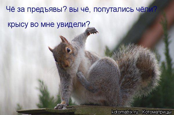 Котоматрица: Чё за предъявы? вы чё, попутались чёли?  крысу во мне увидели?