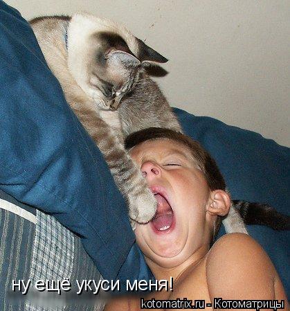 Котоматрица: ну ещё укуси меня!