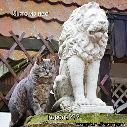 Котоматрица: И кто из нас Король???