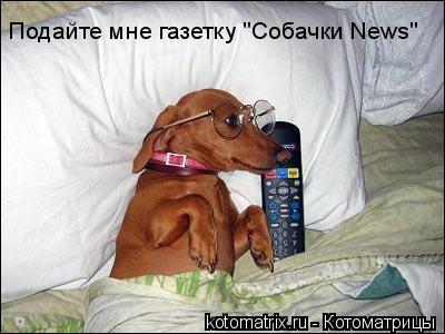 "Котоматрица: Подайте мне газетку ""Собачки News"""
