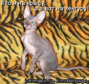 Котоматрица: Кто и на крысу, а я вот на кенгуру!!!