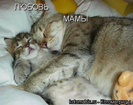 Котоматрица: ЛЮБОВЬ    МАМЫ