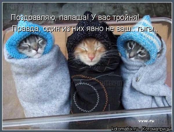Котоматрица: Поздравляю, папаша! У вас тройня!  Правда, один из них явно не ваш.. гыгы..