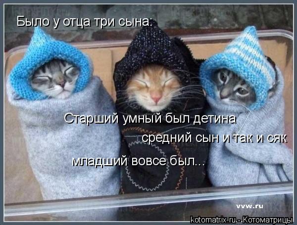 Котоматрица: Было у отца три сына: Старший умный был детина средний сын и так и сяк младший вовсе был...
