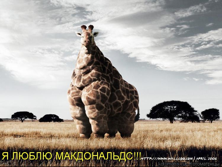 Котоматрица: Я ЛЮБЛЮ МАКДОНАЛЬДС!!!