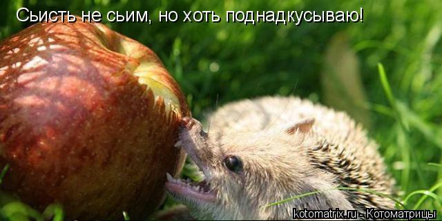 Котоматрица: Сьисть не сьим, но хоть поднадкусываю!