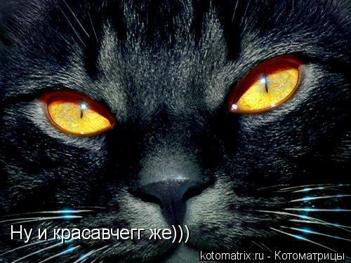 Котоматрица: Ну и красавчегг же)))
