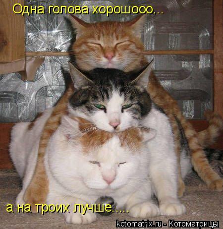 Котоматрица: Одна голова хорошооо... а на троих лучше.....