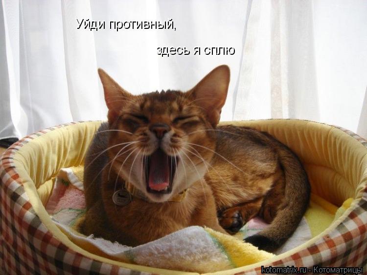 Котоматрица: Уйди противный, здесь я сплю