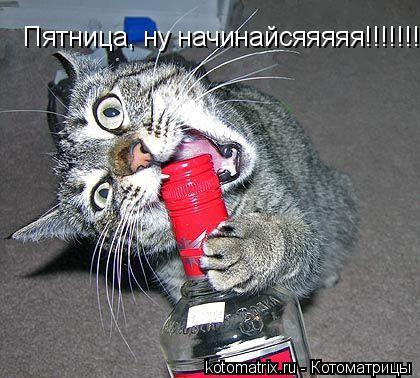 Котоматрица: Пятница, ну начинайсяяяяя!!!!!!!!
