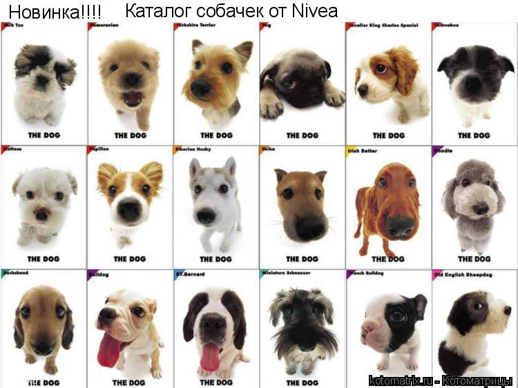 Котоматрица: Новинка!!!! Каталог собачек от Nivea