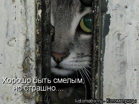 Котоматрица: Хорошо быть смелым, но страшно....