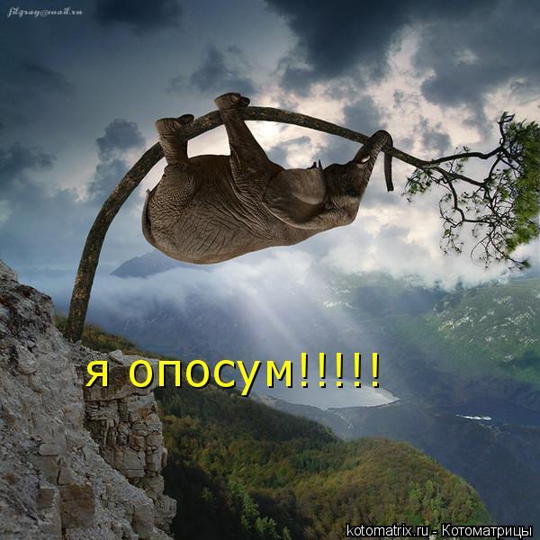 Котоматрица: я опосум!!!!!