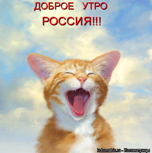 Котоматрица: ДОБРОЕ   УТРО РОССИЯ!!!