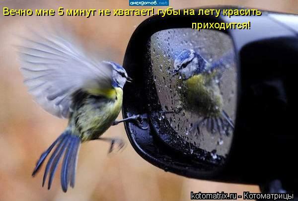 Котоматрица: Вечно мне 5 минут не хватает! губы на лету красить приходится!